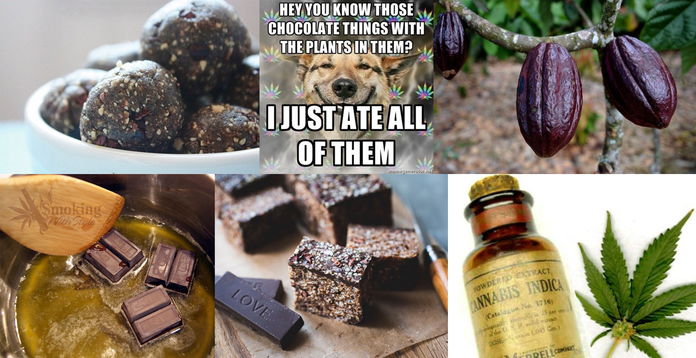 cacao-cannabis-daw