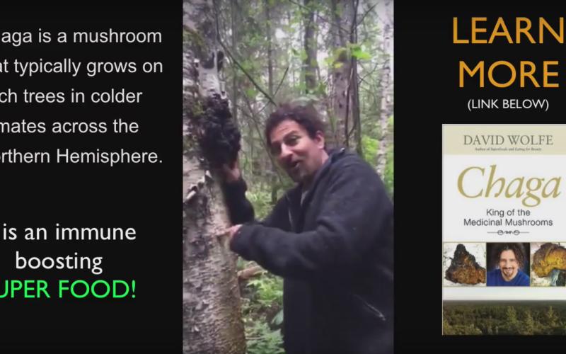 david wolfe chaga mushrooms hunt