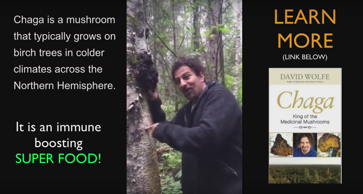 david wolfe chaga mushrooms hunt