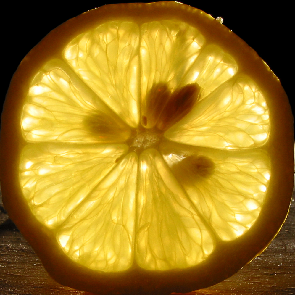 Backlit_lemon_slice_with_seeds