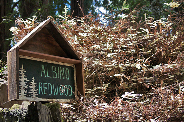 albino-redwood-sign
