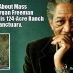 morgan freeman david wolfe