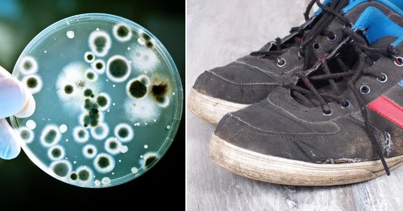 shoes bacteria FI