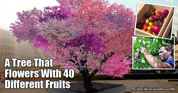 tree 40 fruits