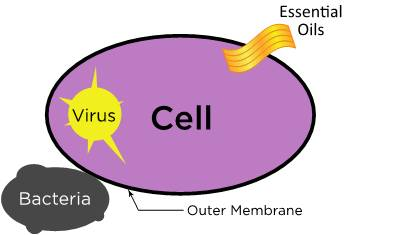 Cell-Picture