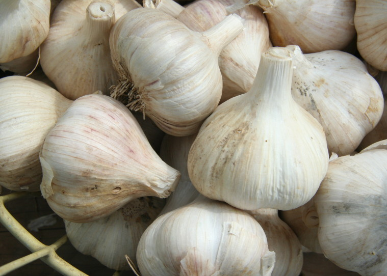 earache garlic