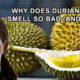 durian-fruit-smell
