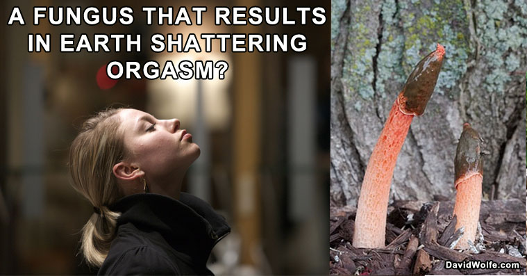 mushroom-orgasm1