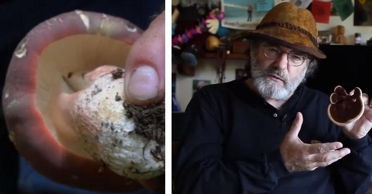 mushroom-save-bees
