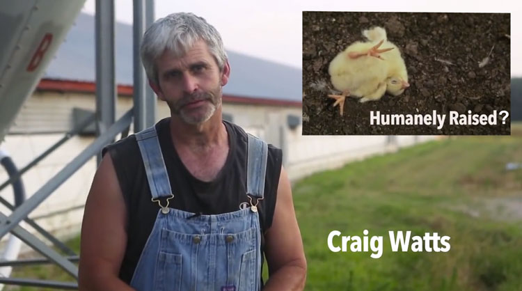 perdue-chick-farmer