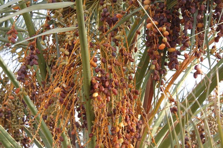 Dates_tree