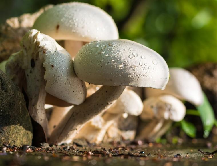 mushroom-372044_1280