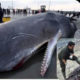 whale-stomach-plastic