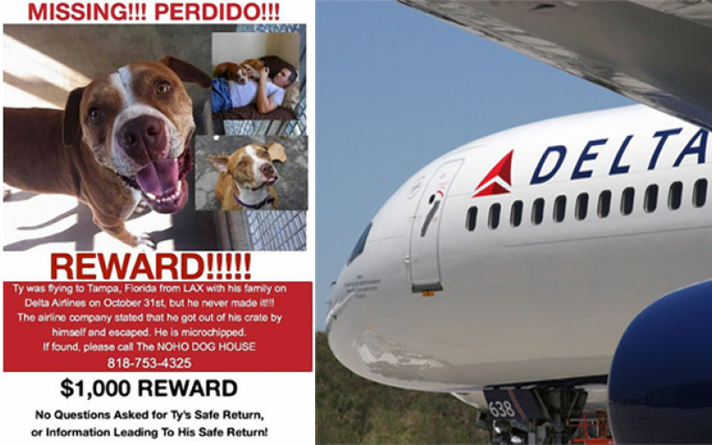 Delta Airlines Will Not Make Pets Fly As Cargo Anymore Davidwolfe Com
