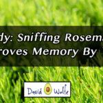 rosemary-memory
