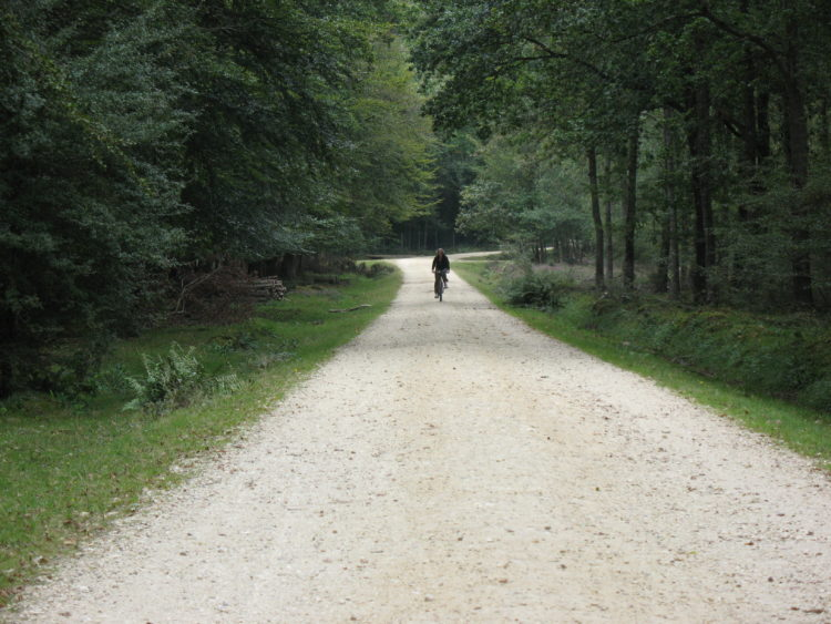 New_Forest_Cycle_path