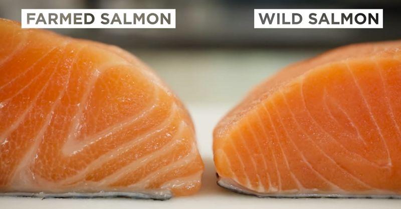 Salmon FI