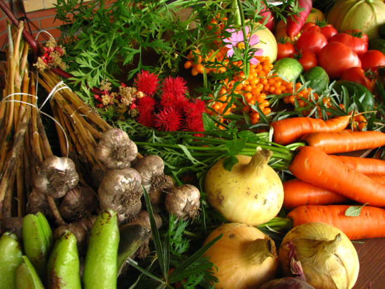 Ecologically_grown_vegetables you can grow containers