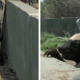badger-escapes