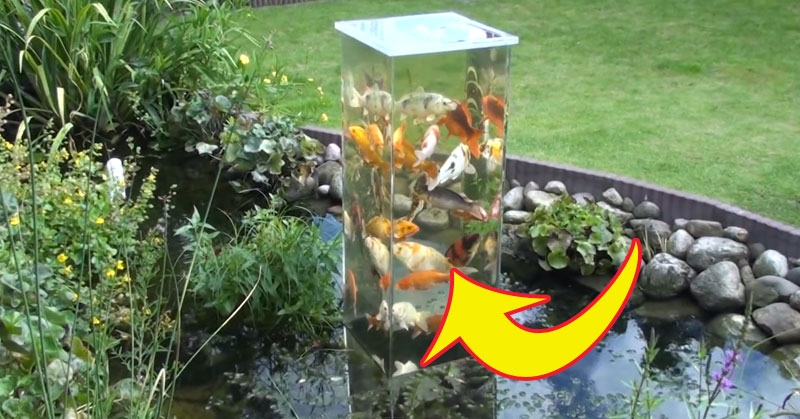 fish-tank-arrow