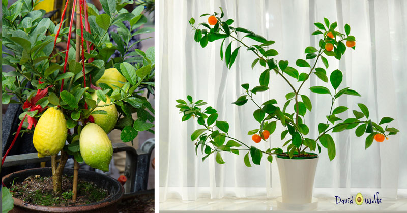 you can grow containers plants