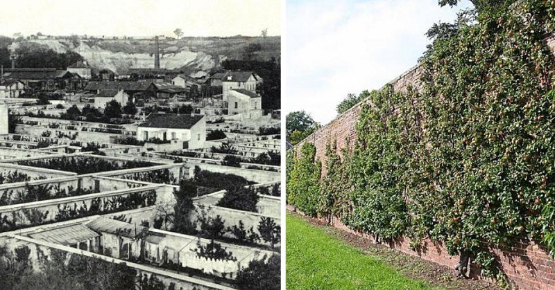 urban farming 1600s