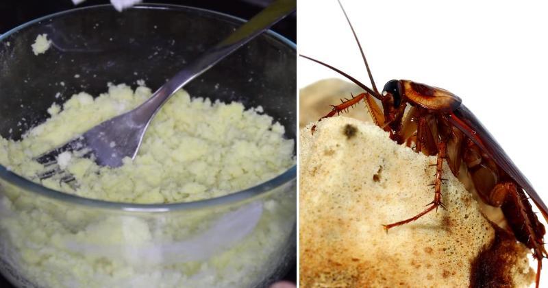 cockroach kill FI