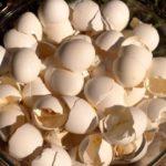 eggshells FI