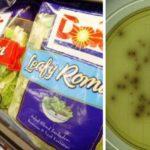 lettuce listeria