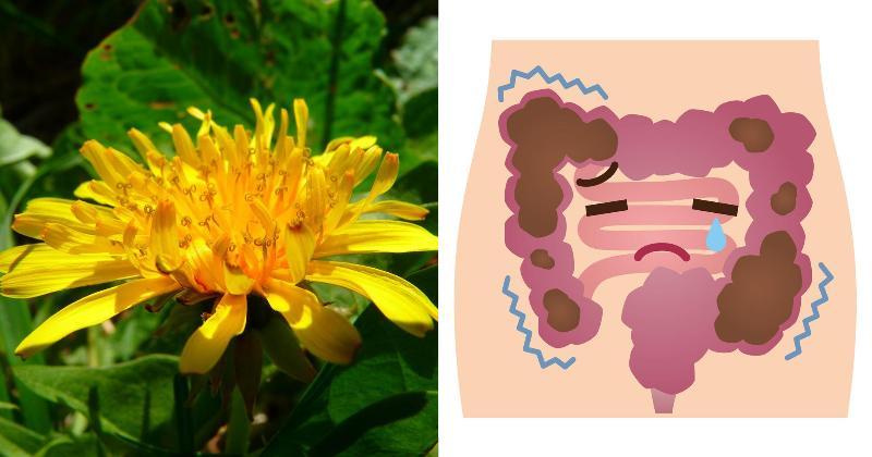dandelions health benefits