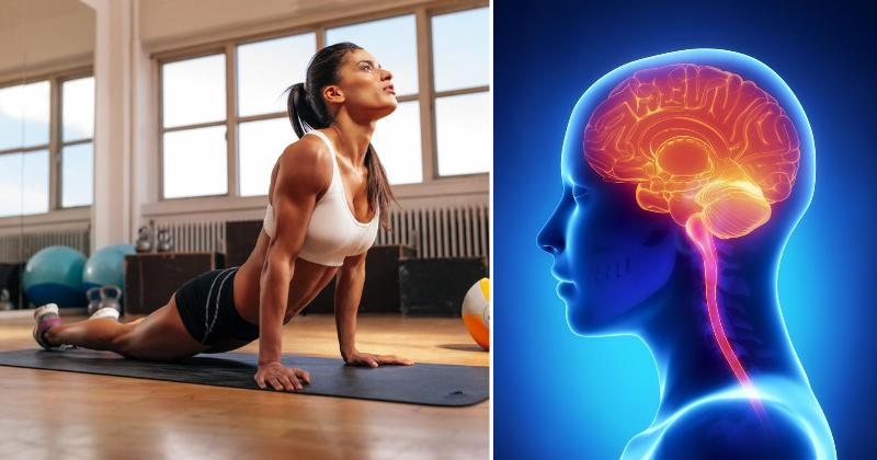 exercise brain FI