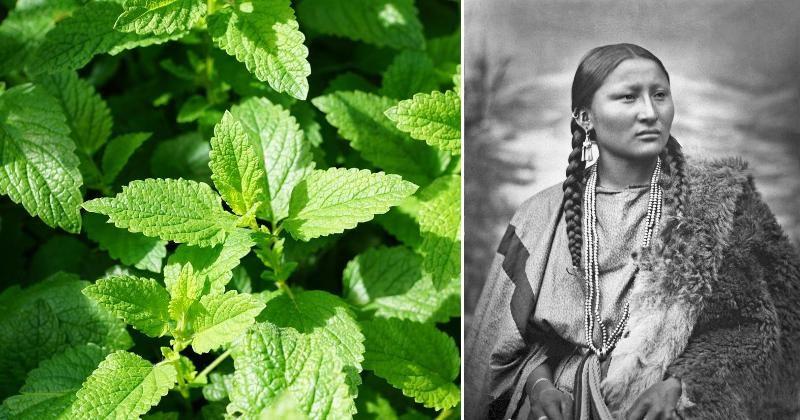 native americans plants FI