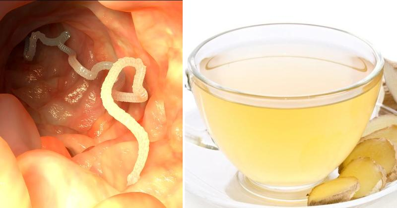 The Natural Remedy That Will PURGE Parasites From Your Body! The Natural Remedy That Will PURGE Parasites From Your Body!