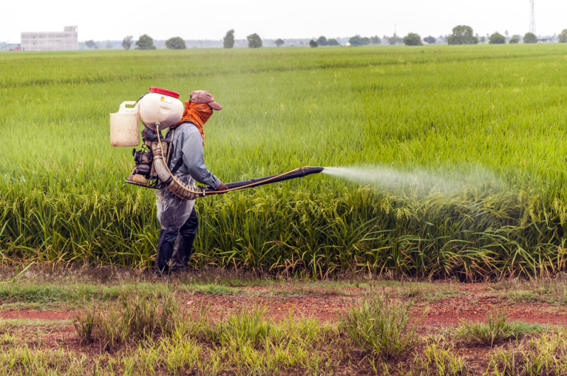 pesticides why wheat