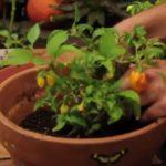 plants indoors FI
