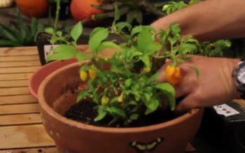 8 Super Veggies You Can Grow Indoors