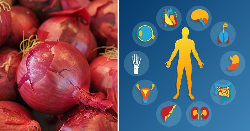 red onion body FI