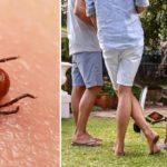 ticks yard FI