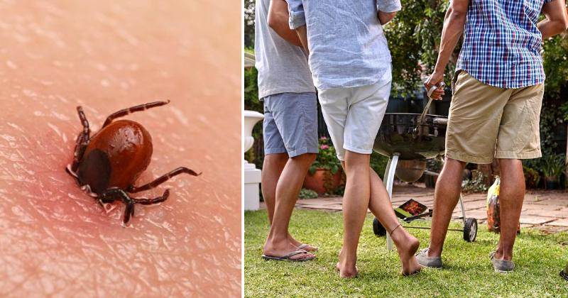 lyme disease ticks yard FI