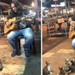 1771605-650-1462888947-cats-listening-music-street-musician-jass-pangkor-buskers-malaysia-2