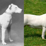 breed manipulation FI