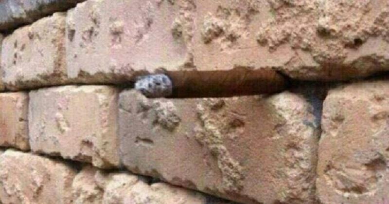 brick wall FI