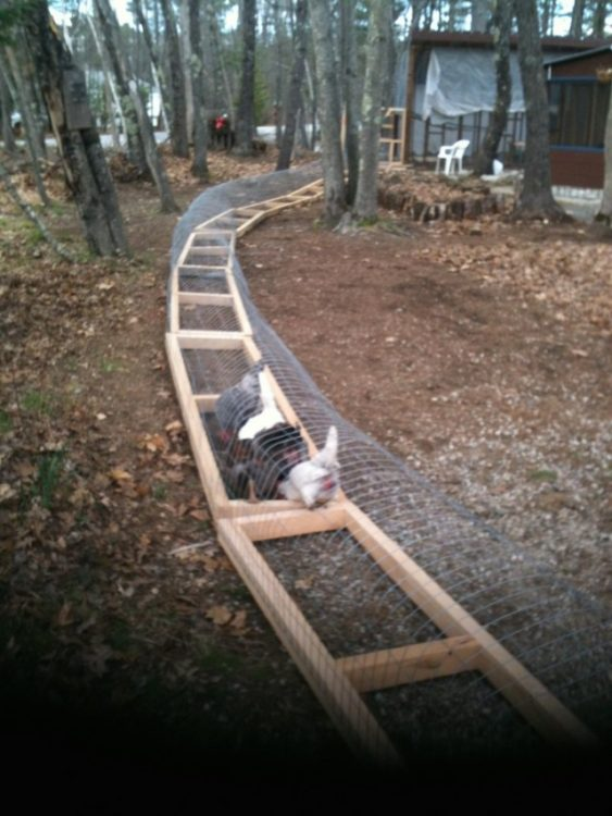 Moveable-Chicken-Tunnel-15-640x853 (1)