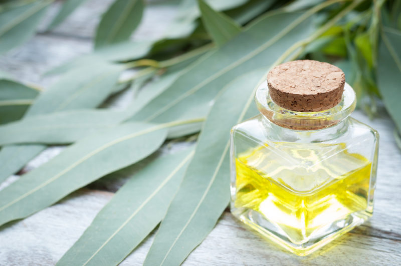 eucalyptus repair lung damage