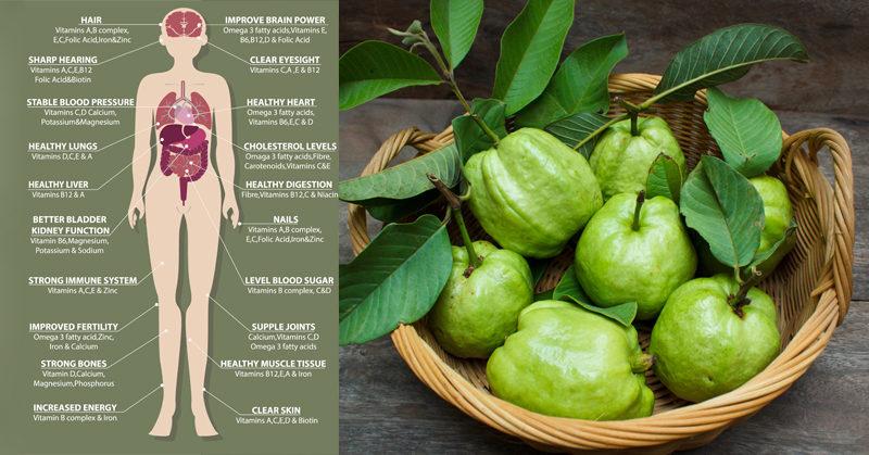 guava health FI