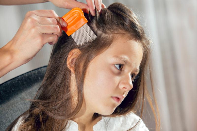 lice comb 2
