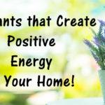 plants positive FI