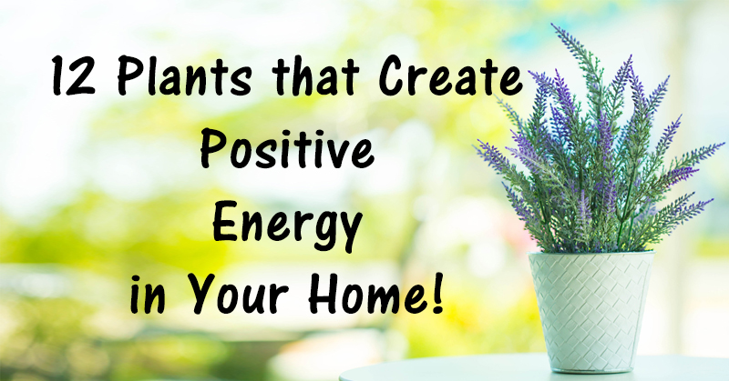 Positive Energy In Home 12 Plants That Create Positive Energy In Your Home  David