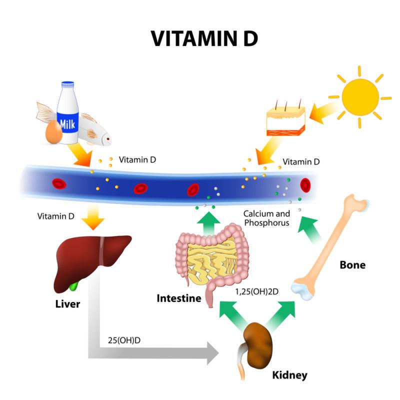 vitamin D absoption