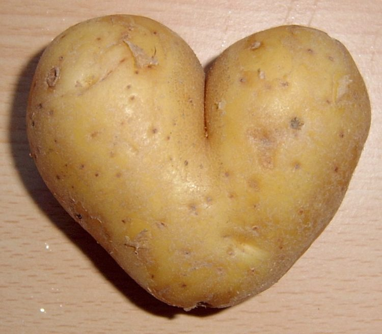 Potato_heart_mutation